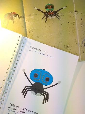 Illustration du livre de l'araignée-paon et son adaptation en relief par le CTEB.