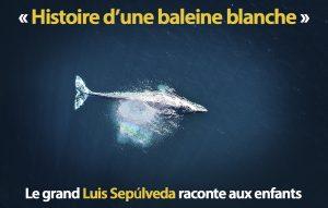 Vue d'en haut, une baleine fait surface dans une eau bleue