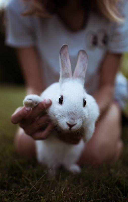 lapin blanc dit au revoir avec sa patte